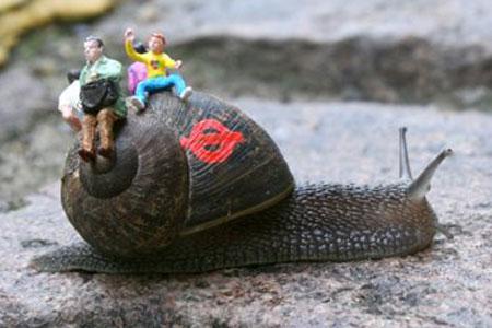 Snail3free_450x300